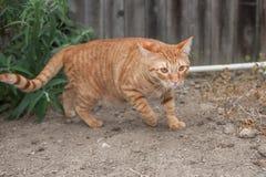 Katzenartig mit hinterlistiger Lage lizenzfreies stockfoto