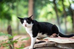 Katzenartig in Schwarzweiss stockfotografie
