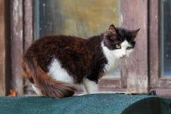 Katzenartig in Schwarzweiss lizenzfreie stockfotos