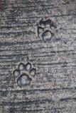 Katzenartige Abdrücke Stockbild
