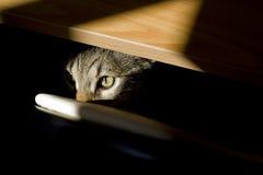 Katzenartiger Blick stockbilder