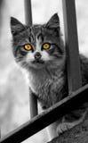 Katzenartiger Blick lizenzfreie stockfotografie