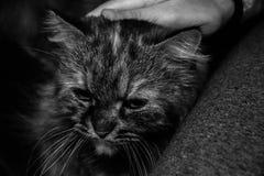 Katzenartiges Fluffness Stockfoto