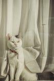 Katzenartiges Modell im Weiß Stockbild