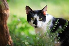 Katzenaufpassen Stockfotos