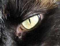 Katzenauge-Abschluss oben Stockbild