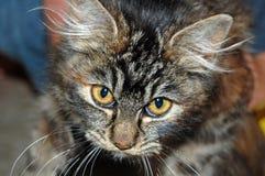Katzenaugen Lizenzfreie Stockfotografie