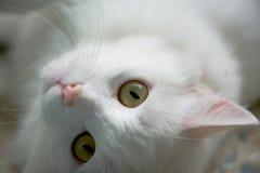 Katzenaugen Stockbild