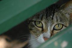 Katzenaugen Lizenzfreies Stockbild