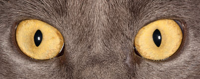 Katzenaugen Lizenzfreies Stockfoto