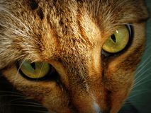 Katzenaugen Lizenzfreie Stockbilder