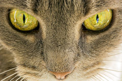 Katzenaugen Stockfoto