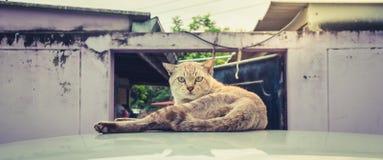 Katzenaugen, die streng anstarren Stockfoto