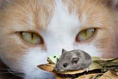 Katzenaugen und Maus Lizenzfreie Stockbilder