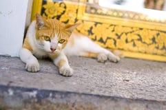 Katzenaugenkontakt Stockfotografie