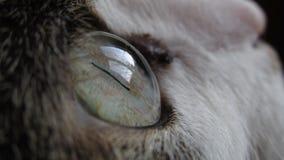 Katzenaugenmakro lizenzfreies stockfoto