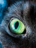 Katzenaugenmakro Lizenzfreie Stockfotos