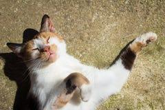 Katzenausdehnungen in der Sonne Stockbild