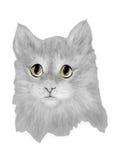 Katzenbaby nett Lizenzfreies Stockbild