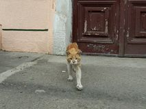 Katzenbandit Stockfotografie