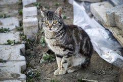 Katzenbilder, nette Katzenbilder, Katze ` s Auge, die schönsten Katzenaugen Stockfotos