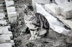 Katzenbilder, nette Katzenbilder, Katze ` s Auge, die schönsten Katzenaugen Stockfotografie