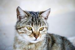 Katzenbilder, nette Katzenbilder, Katze ` s Auge, die schönsten Katzenaugen Stockbild