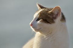 Katzenblick lizenzfreie stockbilder