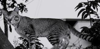 Katzenblick Stockfotos