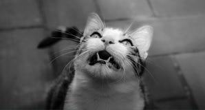 Katzenblick Stockfotografie