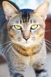 Katzenblick auf mich Stockfoto