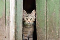 Katzenblicke der getigerten Katze lizenzfreies stockbild