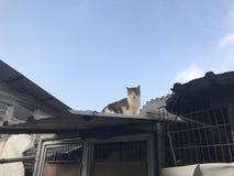 Katzenblinzeln auf der Wurzel Lizenzfreies Stockbild