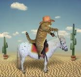 Katzencowboy auf einem Pferd 3 lizenzfreies stockfoto