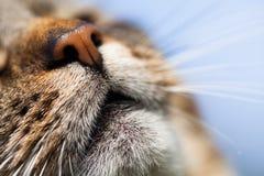 Katzendetail Lizenzfreie Stockbilder