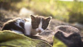 Katzeneinsames süßes Tierhaustier Stockfotos