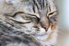 Katzeneinschlafen stockfotos