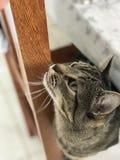 Katzenfachmannbild Stockfotografie