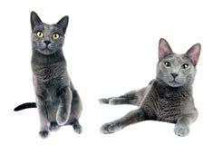 Katzenfamilie Stockfotos