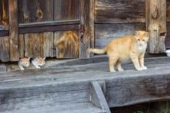 Katzenfamilie auf einem Bauernhof Lizenzfreie Stockfotos