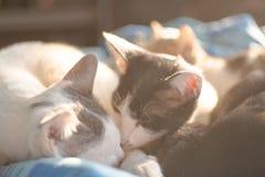 Katzenfamilie und Aufflackernlicht Stockfotos