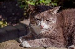 Katzenfell von der Sonne Lizenzfreie Stockbilder