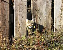 Katzenflüchtige blicke von hinten einen Zaun Lizenzfreies Stockbild