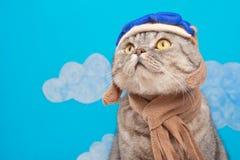 Katzenfliegerpilot, schottisches Whiskas in der Maske und in den Schutzbrillenversuchsflugzeugen Konzept des Piloten, Superkatze, stockbild