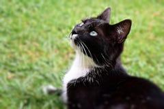 Katzenfrauen im Garten stockfoto