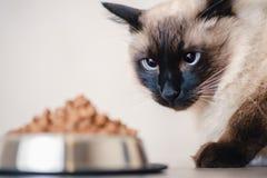 Katzenfutterschüssel-Haustiertier Mahlzeit flaumig stockbilder