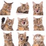 Katzengefühle zusammengesetzt lizenzfreies stockfoto