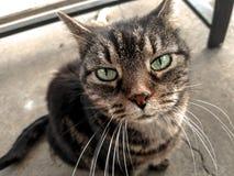 Katzengehen stockbilder