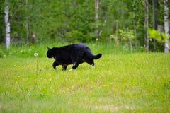 Katzengehen Stockfoto