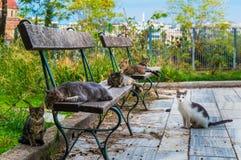 Katzengesellschaft Katzen, die auf eine Bank für ihre Siesta in Monastiraki-Bereich in Athen Griechenland legen lizenzfreie stockfotografie